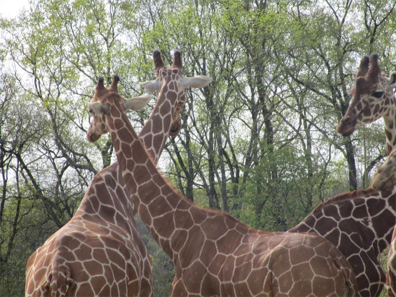 Colonie de vacances Zoo de Beauval