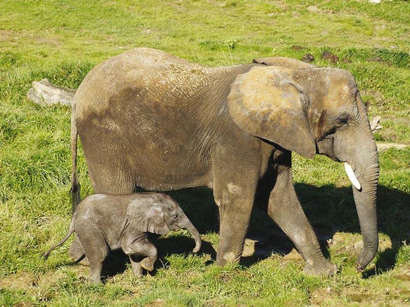 Zoo de Beauval sortie enfants