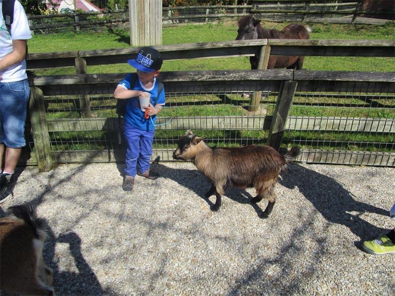 Ferme pédagogique enfants chèvre