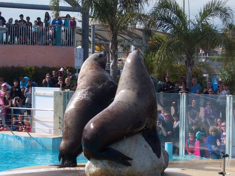 Rencontre avec les dauphins marineland lagoon