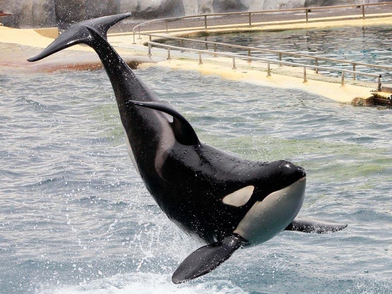 Rencontre avec les dauphins marineland