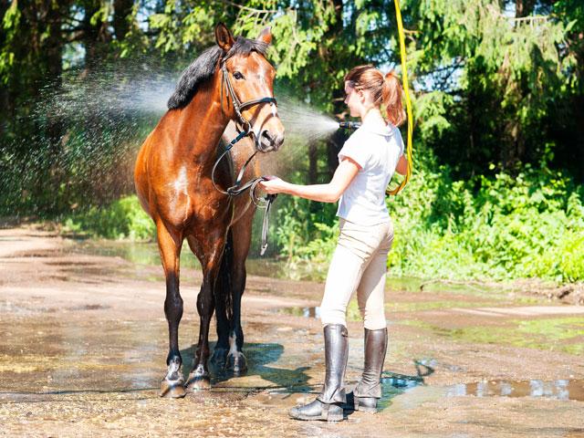 Ados en stage prenant soin de son cheval