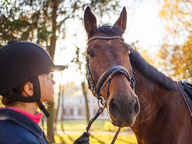 Portrait d'un cheval et son cavalier en stage sportif