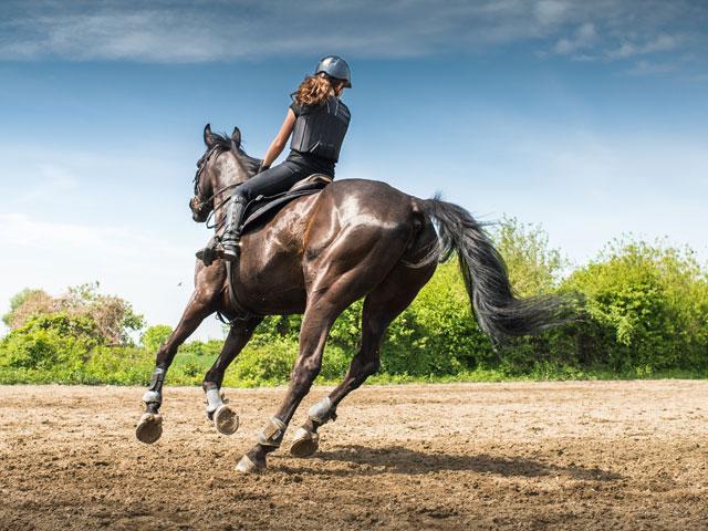 Apprendre à faire du cheval en stage sportif