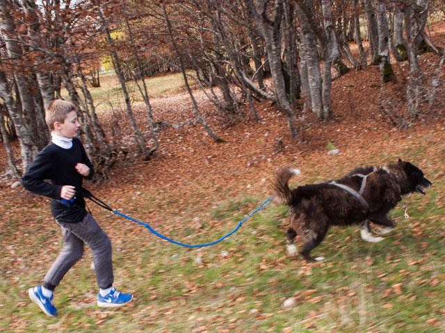 Enfant pratiquant la cani rando en colonie de vacances