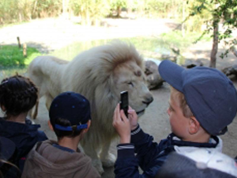 Enfants en colo au zoo de la flèche
