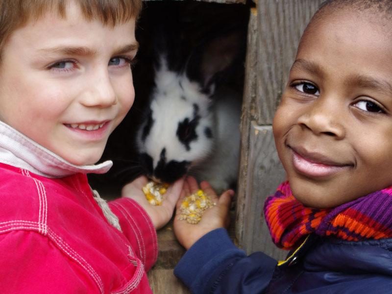 deux enfants nourrissant le lapin en colonie de vacance