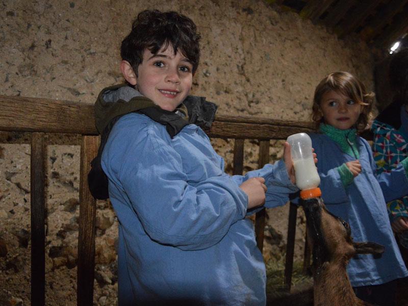 Enfants donnant le biberons aux animaux de la ferme en colo