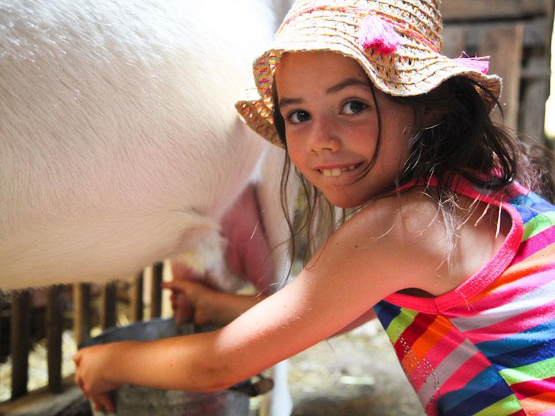 Jeune fille en train de traire une vache en colonie de vacances à la ferme
