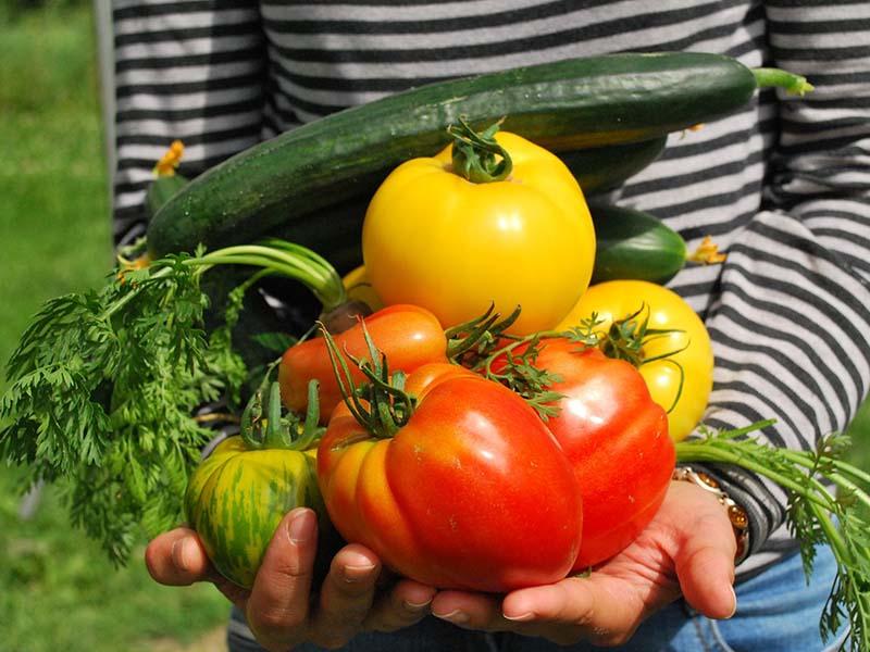 Enfant tenant dans ses mains des fruits et légumes en colonie de vacances ce printemps