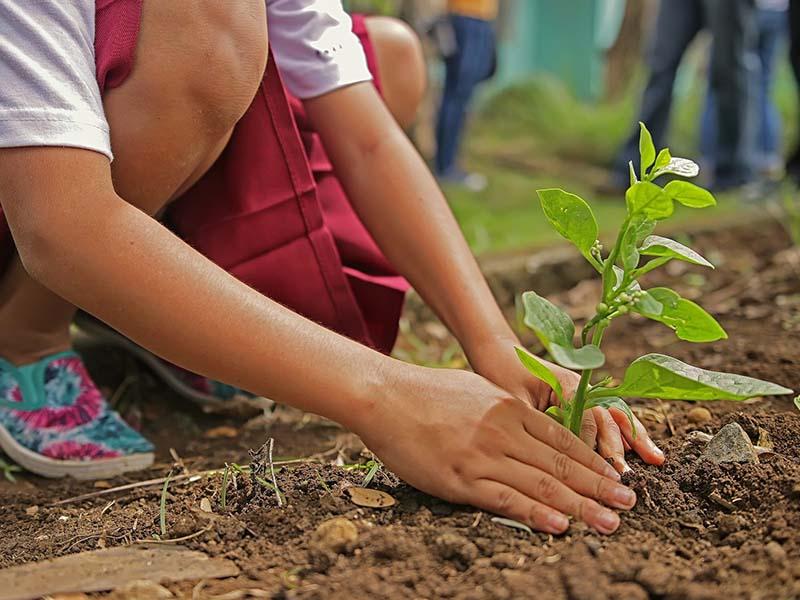enfant faisant le potager en colonie de vacances jardin et cuisine