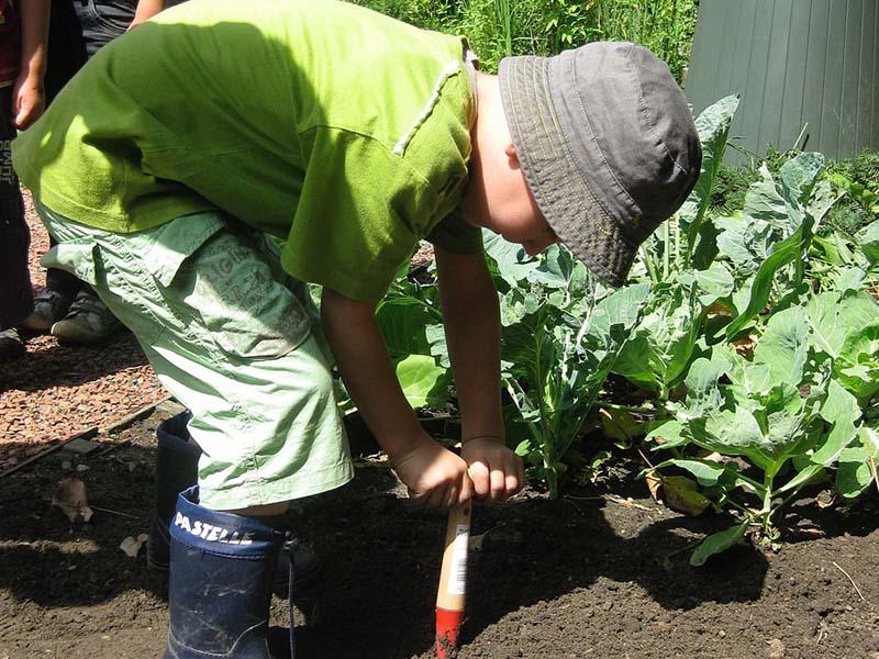 jeune garcon faisant du jardinage dans un potager en colo printemps