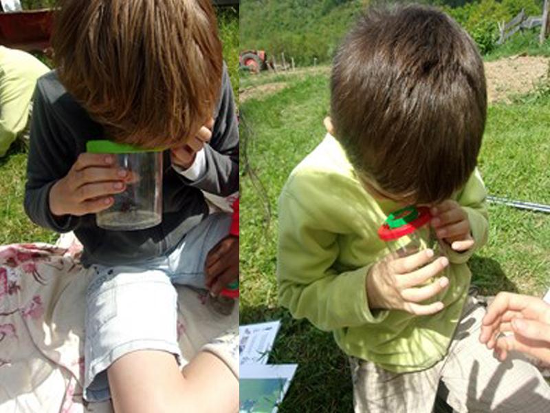 Enfants observant les insectes dans un bocal