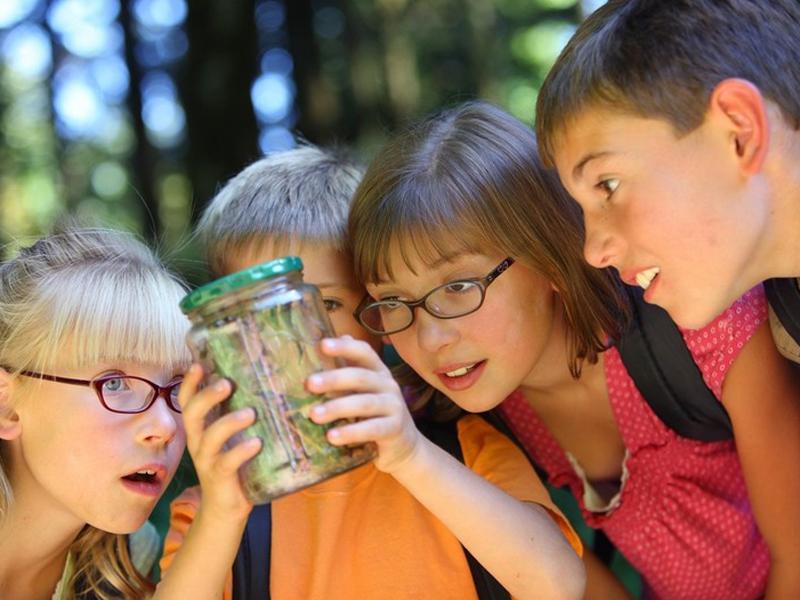 Enfants observant la faune et la flore en colo