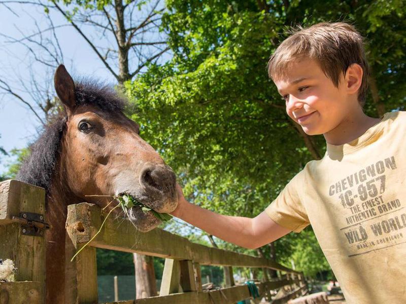 Portrait d'un jeune enfant avec un cheval