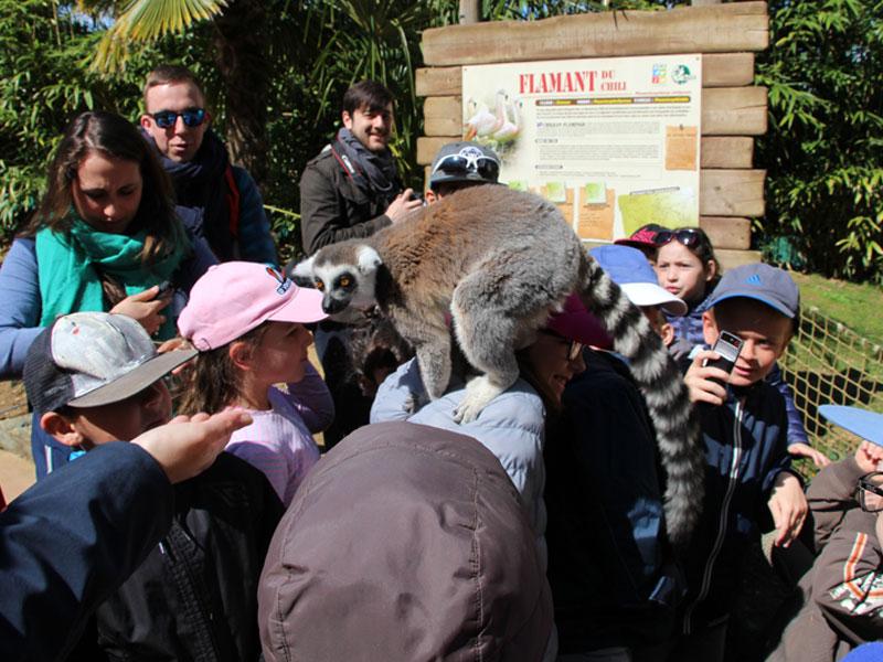 Enfants en randonnée en colonie de vacances au zoo de la flèche