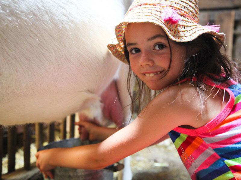 Apprendre à traire les animaux de la ferme en colonie de vacances