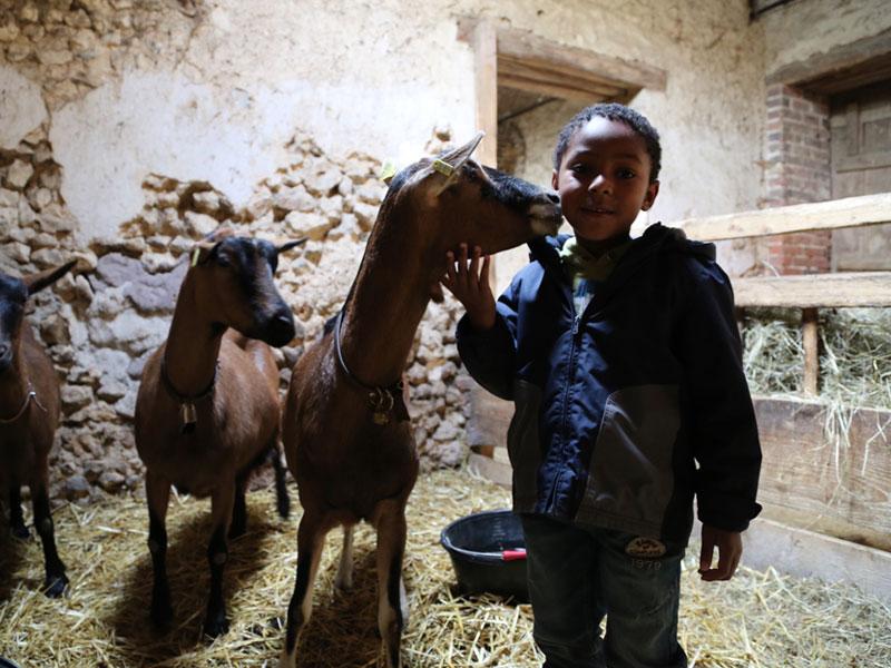 Enfant qui s'occupe des chevaux à la ferme toussaint