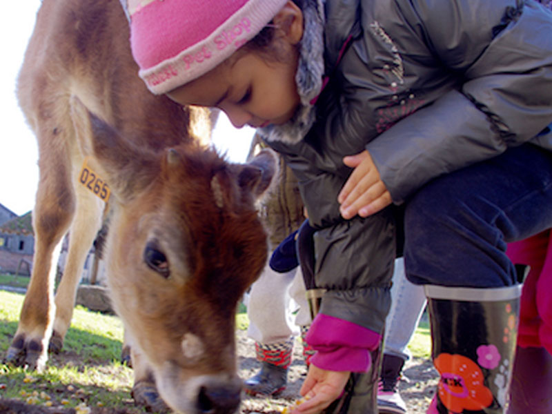 Enfant apprenant à s'occuper des animaux de la ferme