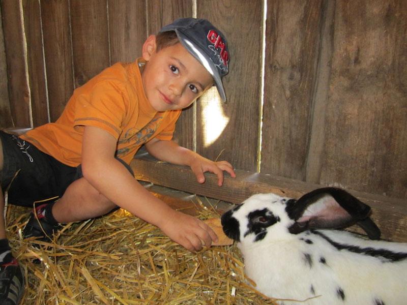 Enfant s'occupant d'un lapin à la ferme