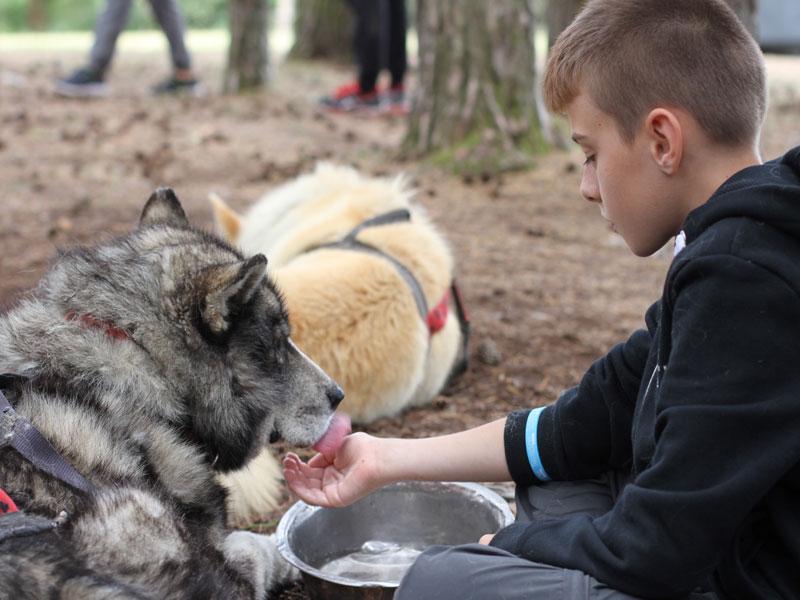 préado s'occupant d'un chien de canirando en colonie de vacances à la montagne