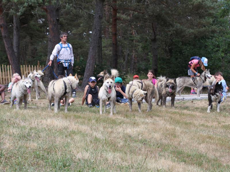 groupe de chiens de traineaux à la montagne cet été durant une colonie de vacances pour enfants