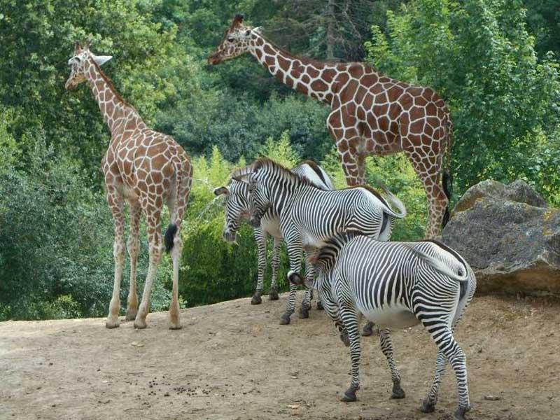 animaux de la savane aperçus au zoo parc de beauval cet automne en colonie de vacances