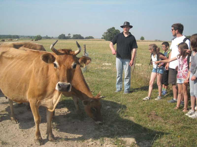 groupe d'enfants nourrissant les bovins en colonie de vacances cet automne