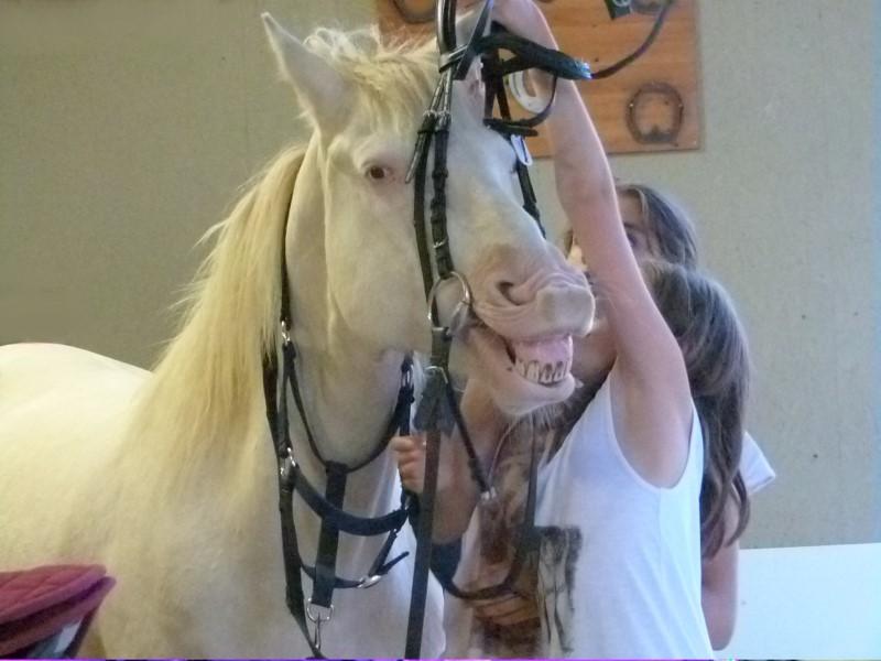 Enfant et son cheval