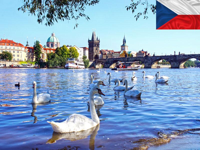 Cygnes et paysage de Prague vu en colonie de vacances cet automne