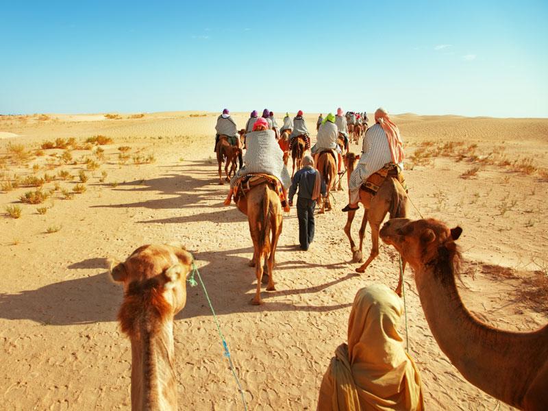 Groupe d'ados à dos de dromadaire en colo au maroc cet automne