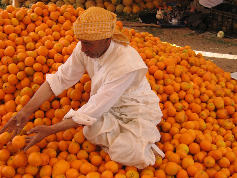 Homme marocain triant les oranges au Maroc