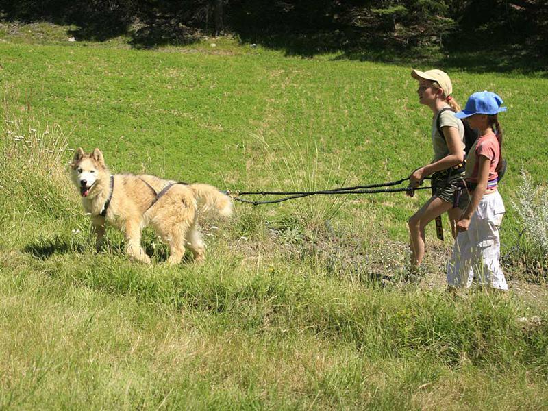 Enfants avec leur chien en canirando