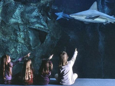 visite aquarium classe découverte