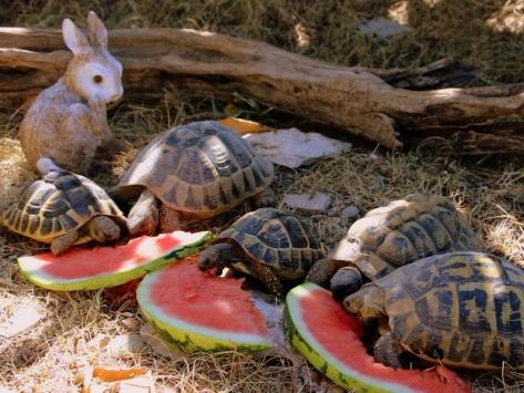 classe-de-mer-var-tortues
