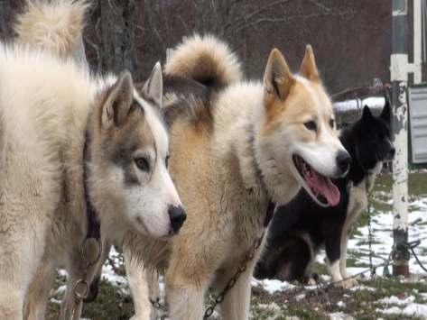 Classe verte Nature et cani-rando