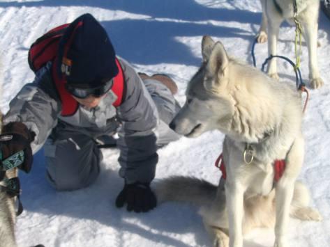 classe découverte traineau et neige