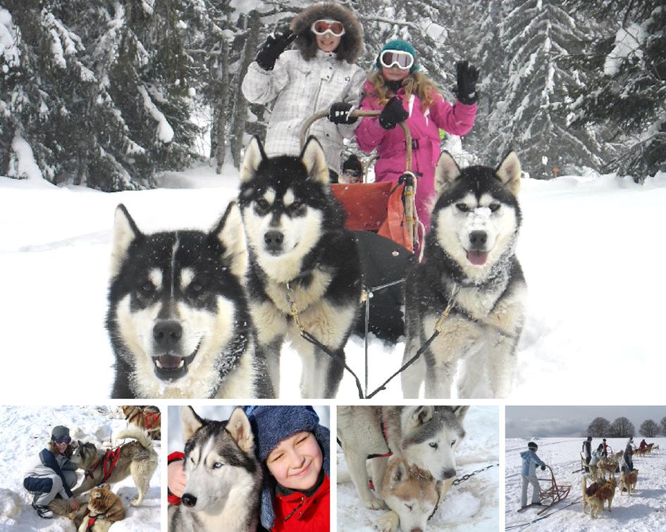 Colonies de vacances hiver chiens de traineaux Djuringa Juniors