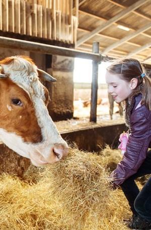 Jeune fille nourrissant une vache à la ferme