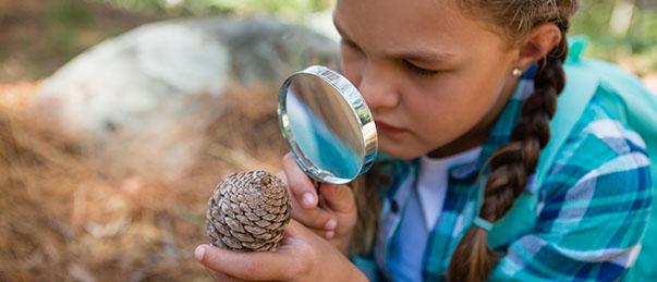 Enfant en classe découverte observant une pomme de pin