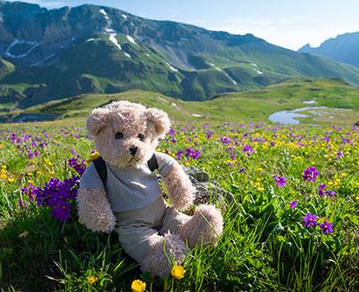 Ours en peluche en colonie de vacances à la montagne