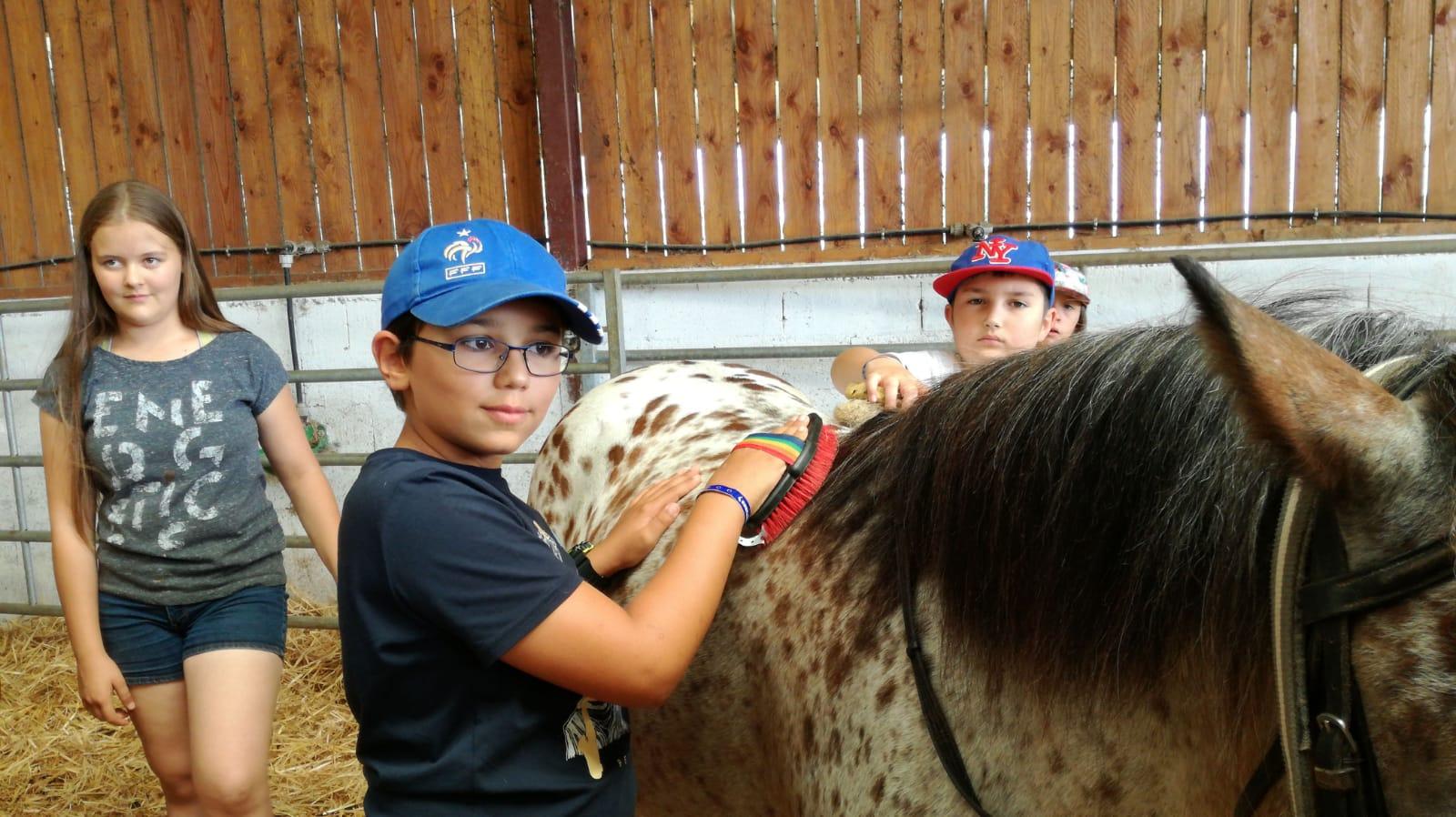 Enfant qui brosse un cheval en colo