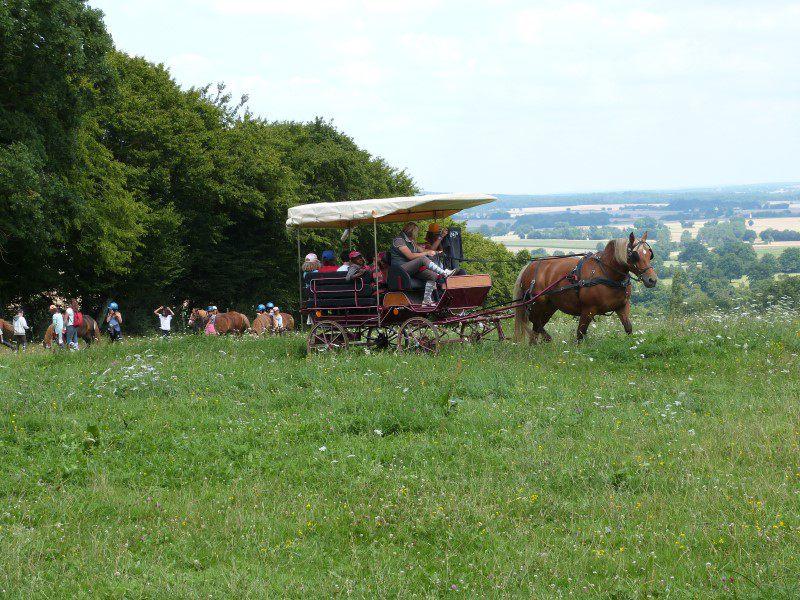 calèche à cheval cet été en colonie de vacances équitation