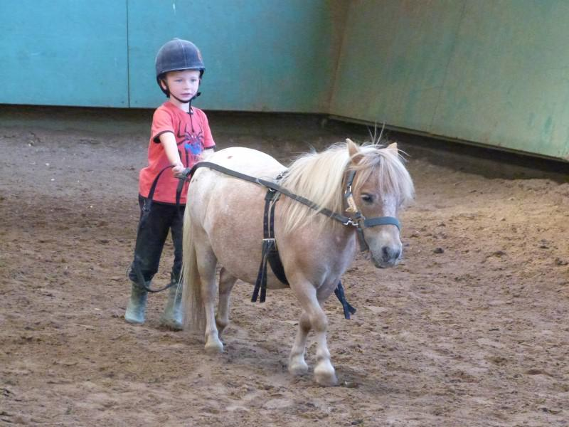 Jeune enfant apprenant les longues rênes en colo équitation avec son poney cet été
