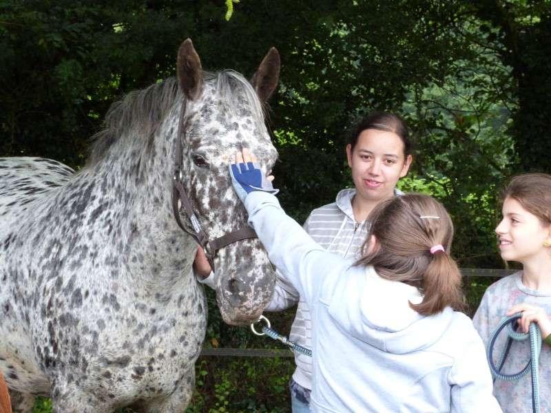 jeunes filles prenant soin du cheval de colonie de vacances cet été