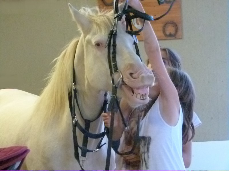 jeune fille apprenant à mettre le mors à son cheval en colo