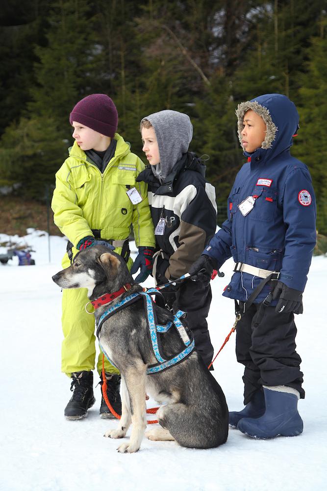 Enfants en colonie de vacances avec des chiens de traineaux